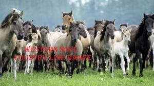 Al Ranch..............per beneficenza @ Santa Maria A Monte | Toscana | Italia